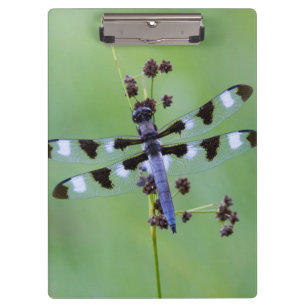 Dragon fly perched on grass, Canada Clipboard
