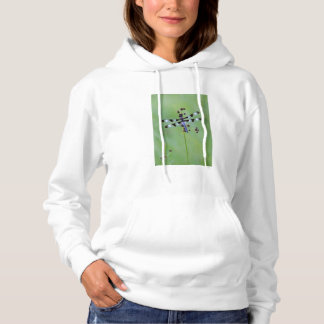 Dragon fly perched on grass, Canada Hoodie