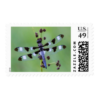 Dragon fly perched on grass, Canada Postage Stamp
