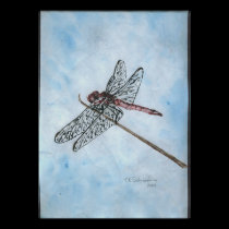 Dragon Fly posters