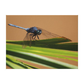 Dragon Fly Resting On Leaf, Kruger National Gallery Wrapped Canvas
