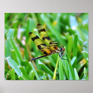 Dragon fly tiger poster