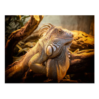 Dragon Iguana Postcard
