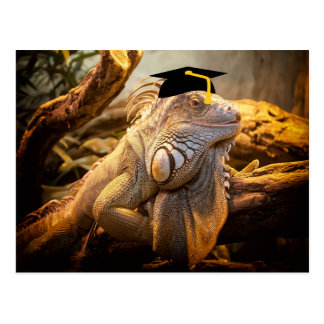 Dragon Iguana with a graduation hat Postcard