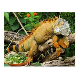 Dragon lizard postcard