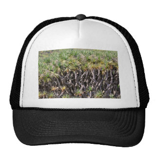 Dragon tree at Tenerife Trucker Hat