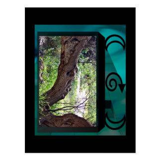 Dragon Tree Postcard