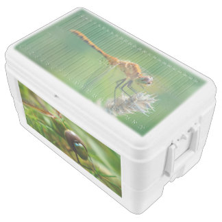 Dragonflies 48 Quart Ice Chest