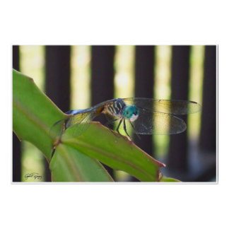 Dragonflies...are beautiful. print