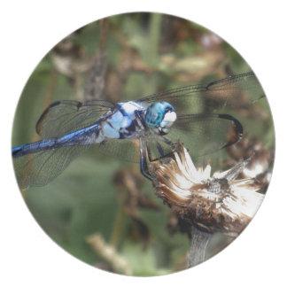 Dragonflies Blue Dragonfly on a Flower Husk Photo Dinner Plate