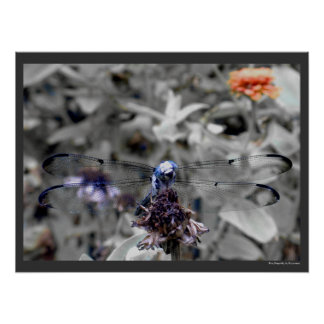 Dragonflies Blue Dragonfly on a Flower Husk Photo Poster