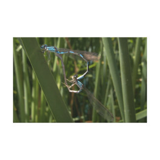 Dragonflies in love canvas print
