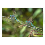 Dragonflies on Branch  Greeting Card