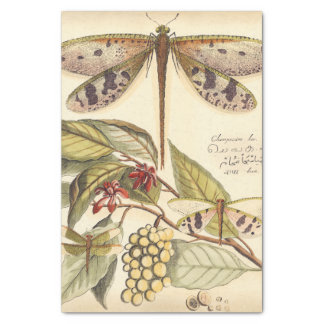 """Dragonflies with Leaves and Fruit 10"""" X 15"""" Tissue Paper"""