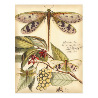 Dragonflies with Leaves and Fruit Postcard