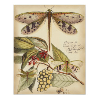 Dragonflies with Leaves and Fruit Poster