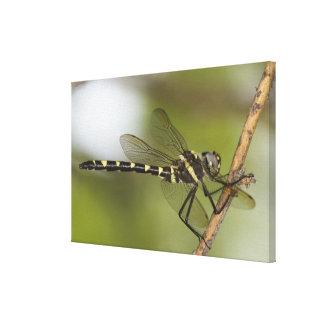 Dragonfly 11 canvas print