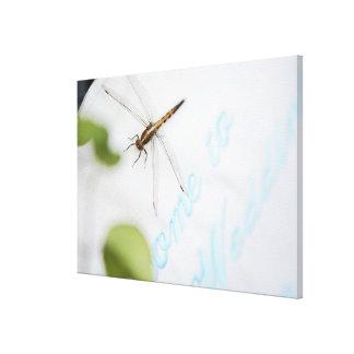 Dragonfly 12 canvas print