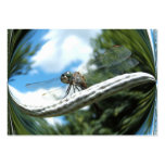 Dragonfly 182 ~ ATC Business Cards