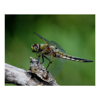 Dragonfly #1 posters