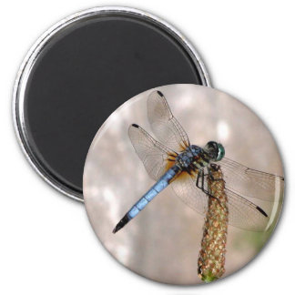 Dragonfly! 2 Inch Round Magnet