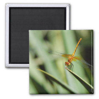 DragonFly 2 Inch Square Magnet