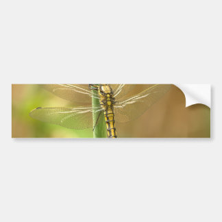 dragonfly-348433  dragonfly insect animal wing sum bumper sticker