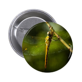 Dragonfly 3 pinback button