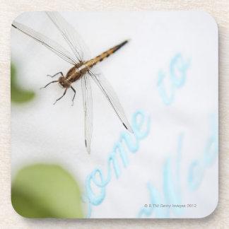 Dragonfly 4 coaster