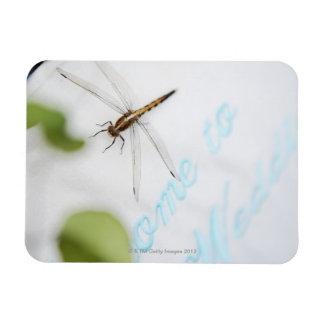 Dragonfly 4 magnet