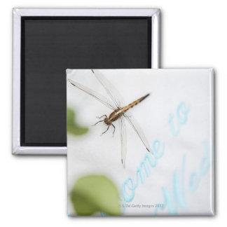 Dragonfly 4 fridge magnet