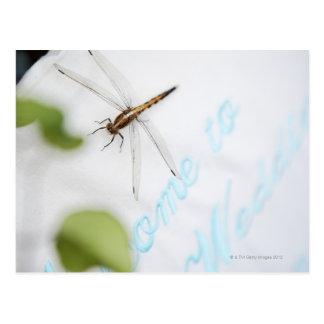 Dragonfly 4 postcard