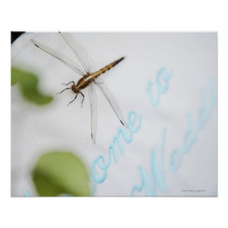 Dragonfly 4 poster