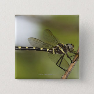 Dragonfly 5 button