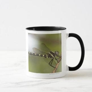 Dragonfly 5 mug
