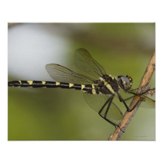 Dragonfly 5 poster