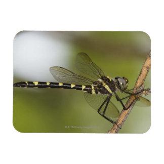 Dragonfly 5 rectangular photo magnet