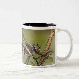 Dragonfly 5 Two-Tone coffee mug