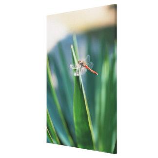 Dragonfly 8 canvas print