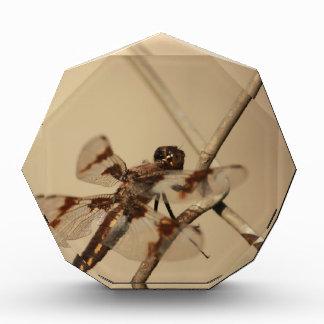 Dragonfly Acrylic Award