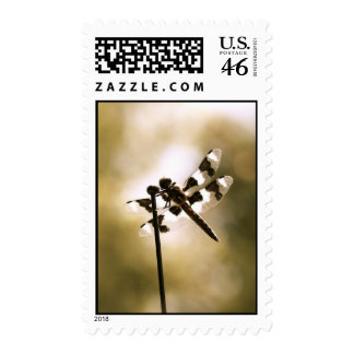 Dragonfly afternoon postage stamps