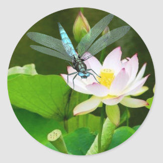 dragonfly and lotus sticker