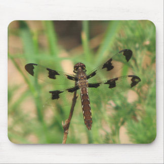Dragonfly : Anisoptera Infraorder Mouse Pads