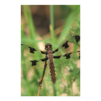 Dragonfly : Anisoptera Infraorder Stationery Paper