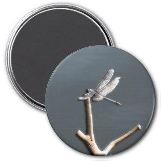 Dragonfly at Rest Magnet