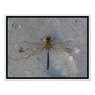 dragonfly at the beach print