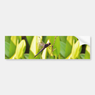 Dragonfly Blue and black on grass. Bumper Sticker