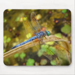 Dragonfly Blue Full Wing Span Mousepad