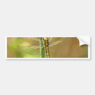 Dragonfly Bumper Stickers