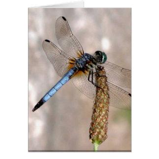 Dragonfly! Card